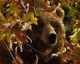 """Набор для вышивания """"Легенда осени (медведь гризли)"""" Kustom Krafts 35037 (крестик)"""