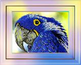 """Набор для вышивания """"Попугай"""", Вышиваем бисером В20 (бисер)"""