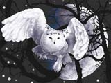 """Набор для вышивания """"Белая сова"""" Панна Ж-0359 (крестик)"""